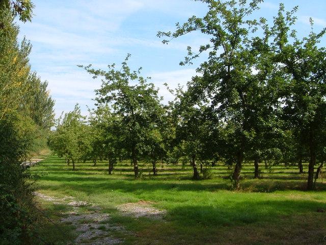 campo manzanos.jpg
