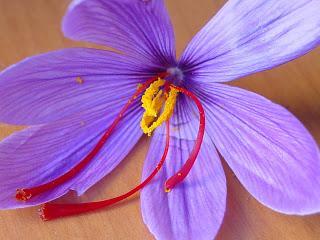 flor-de-azafran.jpg