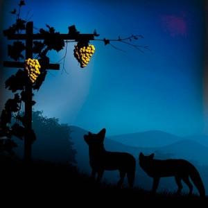 Vinos de Vendimia Nocturna