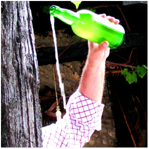 Asturian ciders and spirits